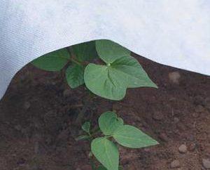 Agrovoloknom – o que é? agrovoloknom aplicação
