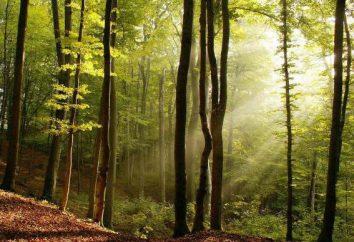 Riddles der Bäume für die Kinder und ihre Eltern