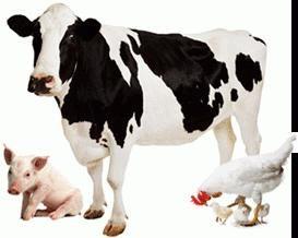 Epizoótica – é uma epidemia em crescimento rápido entre os animais. Como evitar problemas?