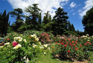 Jardin botanique Nikitski en Crimée. photo Nikitsky Jardin botanique