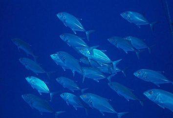 Carni di pesce: fatti e foto interessanti
