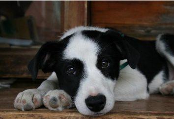 Mestizo – un chien merveilleux et beau