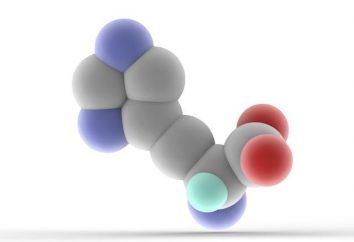 Quante aminoacido è una parte della proteina? Gruppi e tipi di amminoacidi