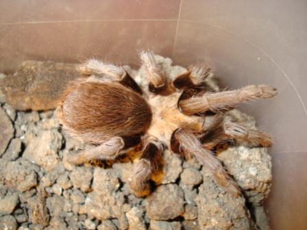 fressen spinnen auch samenflüßigkeit