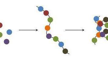D'après ce que les composés organiques simples comprennent des protéines? Structure et propriétés des fonctions