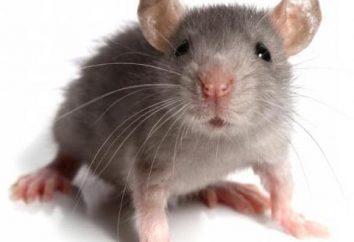 """""""Mouse fuss"""": il significato della fraseologia, il tono di espressione e gli esempi di utilizzo"""