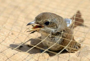 Diversi modi per fare una trappola per gli uccelli. Come fare una trappola per gli uccelli fuori dalla scatola o fuori dalla bottiglia?