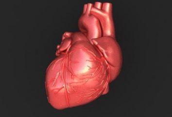 Herzleitungssystem: Struktur, Funktion und anatomische und physiologische Merkmale