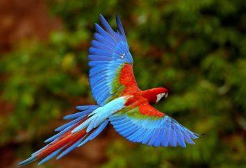 Die Struktur von Vogelfedern. Arten von Federn