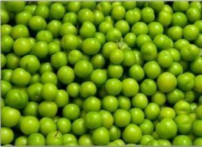 prugne verdi e le sue qualità utili