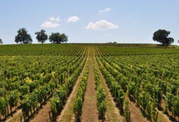 Dbanie o winogron na wiosnę i lato: główne zalecenia