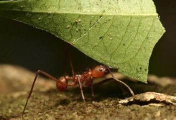 Quanto pesa la formica – Occupiamoci