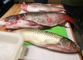 Chiudere carp – pesce con filetti di dolci e gustosi. diversi piatti
