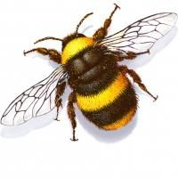 abelha ninho onde as abelhas vivem