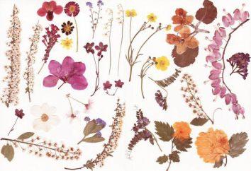 Automne. Matériau naturel: feuilles, glands, châtaignes, pommes de pin