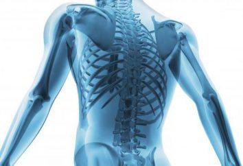 Die Struktur der menschlichen Wirbelsäule: Die Regelung, die Bezeichnung der Hauptabteilungen. Strukturmerkmale