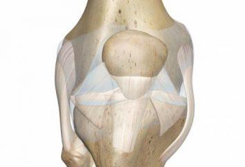 legamento crociato del ginocchio: un trauma, il trattamento, la riabilitazione