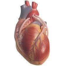 Serce operacji pomostowania naczyń: Wskazania i metody realizacji