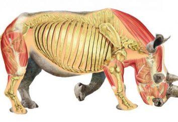 Struktura wewnętrzna ssaków. Struktura i funkcja narządów wewnętrznych ssaka