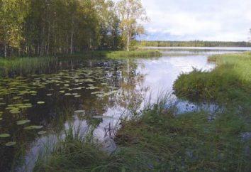 In Vodlozersky come ottenere National Park? Visita della città, parco degli animali