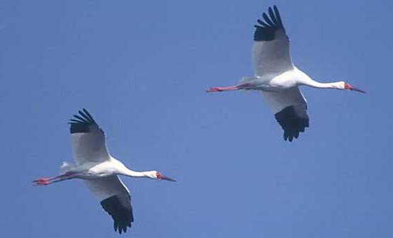 Welche Vögel Fliegen Nicht In Den Süden