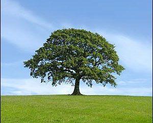 La plantation des glands de chêne: parcelle de jardin paysager