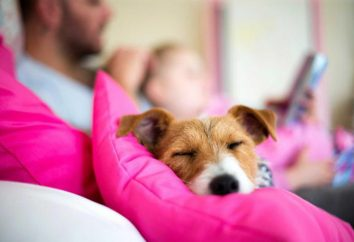 Ile godzin pies powinien spać na co dzień?