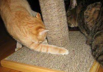 Arranhador para gatos com suas próprias mãos: como é que é fácil para torná-los