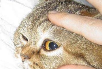 Jak wykastrować kota w obecnych warunkach?