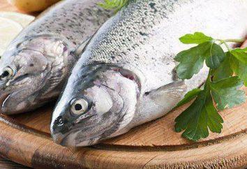 Które witaminy jest powszechne w rybach? Dlaczego jest to pomocne, aby jeść ryby?