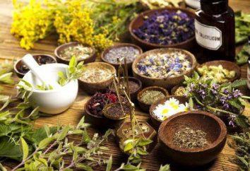 Le piante medicinali del Territorio di Krasnodar: foto, descrizione, applicazione