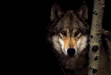 I lupi sono alimentati in diversi habitat