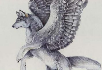 Wilk ze skrzydłami: jak rysować krok po kroku?