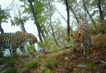 """""""Leopard Land"""" – Park Narodowy w Kraju Nadmorskim"""