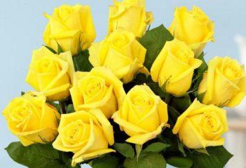 fiori invernali: descrizione, foto. fiori in vaso in inverno