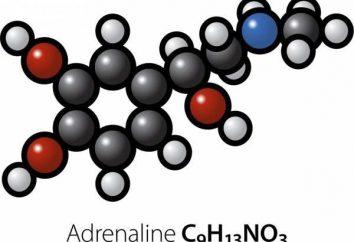 """Adrenalina – es la hormona """"emocional"""". Todos los más interesantes acerca de este tema: Beneficios, daños, sentimientos y adictos a la adrenalina"""