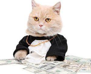 Das Wesen des Geldes in der modernen Welt. Das Konzept des Geldumsatzes