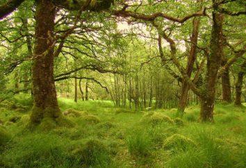 foreste sclerophyllous e sempreverdi e cespugli: geografia, flora e fauna
