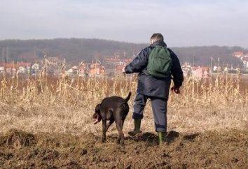 chasse au faisan passionnant