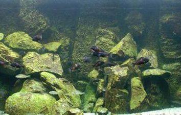 Gruta para el acuario con sus propias manos: algunas ideas interesantes y sencillo