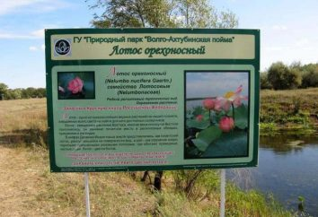Lake of lotuses in der Region Volgograd: die Beschreibung, Natur, Ausflüge