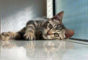 Krzywica kotek: przyczyny, objawy, leczenie