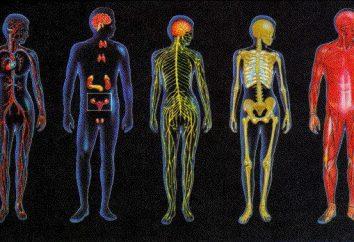 Los sistemas que combinan todos los órganos: la fisiológica principal y sistemas funcionales de los organismos vivos