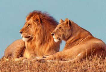"Safari Park ""Taigan"" auf der Krim (Fotos)"