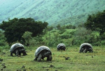 Isole Galapagos: Un viaggio in un angolo misterioso del mondo