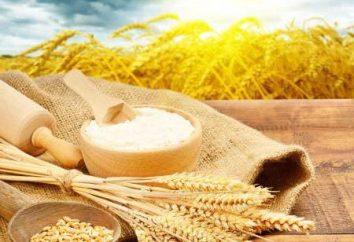 Mąka manitoba: charakterystyka, zastosowanie