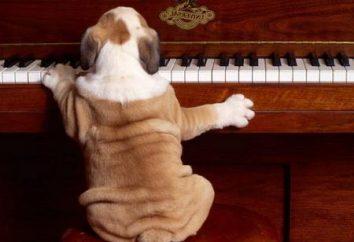 Como jogar o cão de piano valsa sem formação na escola de música, sem ouvido para a música e conhecimento da música?