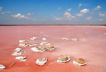 Koyashskoe lago. Koyashskoe lago de água salgada na Crimeia