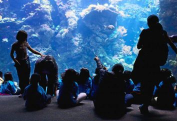Willkommen in das Aquarium (Barcelona, Spanien)!