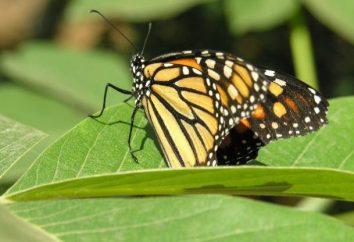 Interesujące fakty na temat owadów. Niesamowite owady